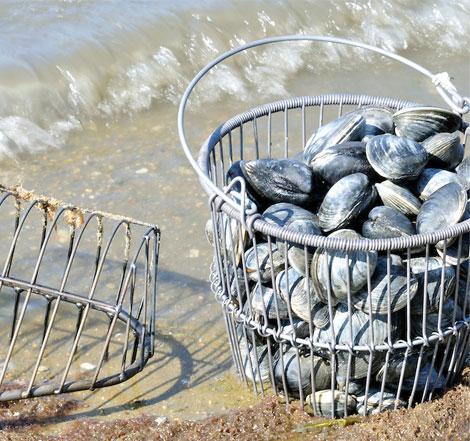 Shop Shellfishing Equipment from KBWhiteCo