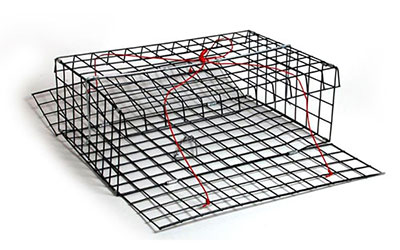 Folding Collapsible Crab Trap