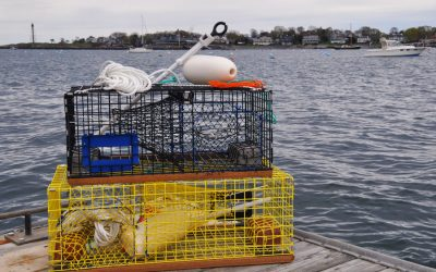 Ready to fish Lobster and Crab Trap Kits